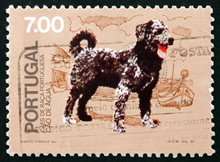 Postage Stamp Portugal 1981 Ca...