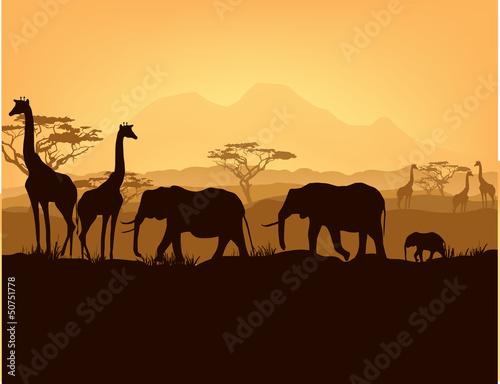 sylwetki-zwierzat-afrykanskich-w-zachod-slonca