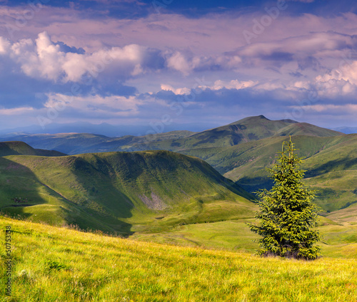 Foto op Aluminium Oranje Colorful summer landscape in the Carpathian mountains. Ukraine