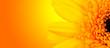 Leinwandbild Motiv Macro shot of gerber blossom detail with shiny blur background