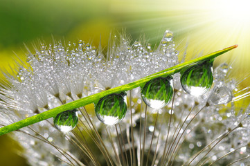 NaklejkaFresh grass with dew drops close up