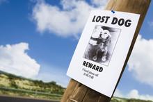 Lost Dog Poster Nailed To A Li...