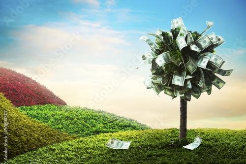 Fototapeta concept, money tree on grass obraz
