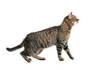 The Cat In The Profile. On The Move. Is Isolated.