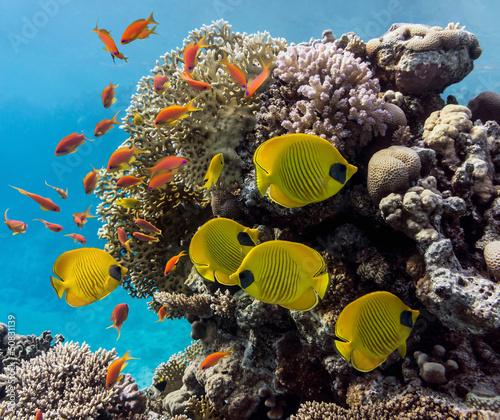 Tuinposter Koraalriffen Coral scene - panorama