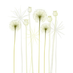Fototapeta Do biura Floral background, dandelion. The meadow in summertime.