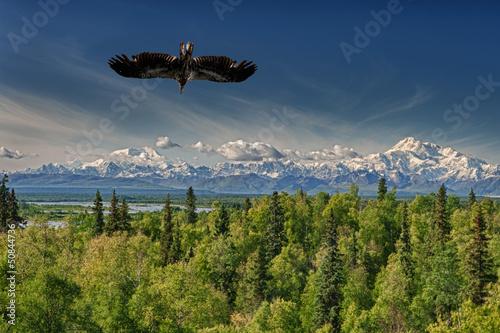In de dag Eagle Isolated Eagle flying over blue sky in Alaska near McKinley