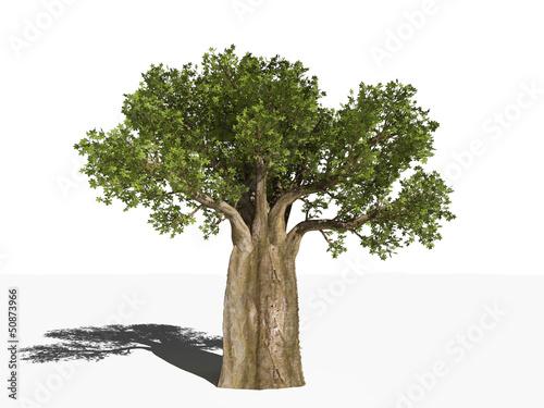 Photo Баобаб - Адансония пальчатая - Adansonia digitata