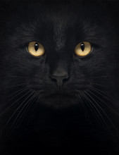 Close-up Of A Black Cat Looking At The Camera