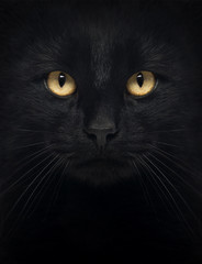Fototapeta Kot Close-up of a Black Cat looking at the camera