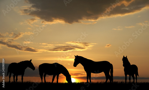 Horses Fototapet