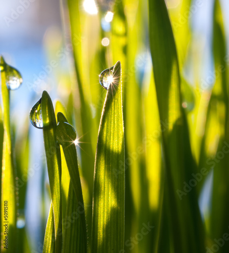 Gras Tautropfen