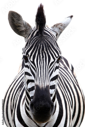 Recess Fitting Zebra Zebra