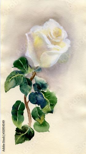 wodoszczelna-kwiat-roza