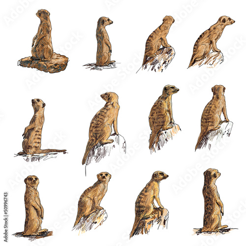 Fotografía The vector set of meerkat in many poses