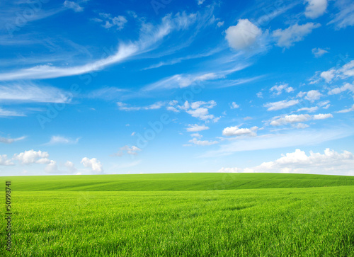 Photo sur Aluminium Herbe field