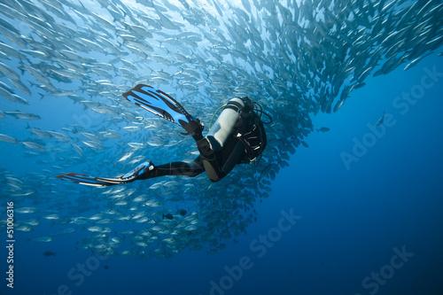Fotografie, Obraz  Trevally and diver