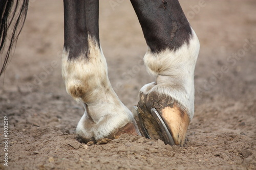 Foto op Canvas Paarden Horse hoofs with horseshoe close up
