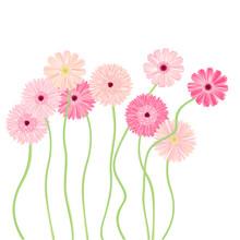 ガーベラの花 ピンク