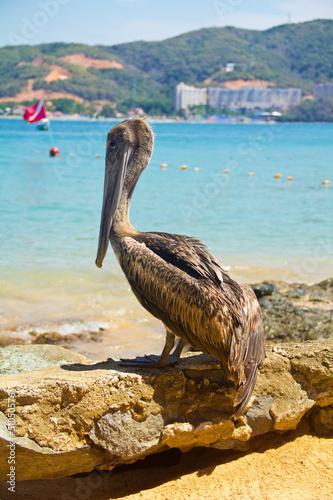 Foto op Plexiglas Caraïben brown pelican