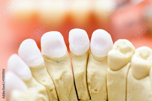 Fototapeta  Zircon teeth