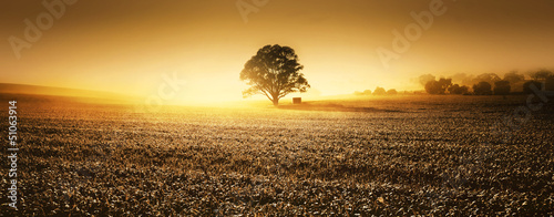 Poster Miel Clare Valley Farmland