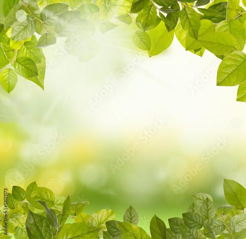 Láminas  green leaves morning