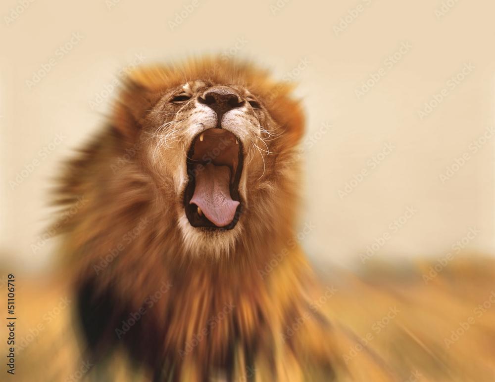 Fototapety, obrazy: Lion