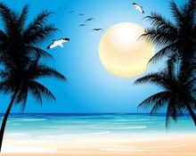 Tropical Exotic Wild Beach-Spi...