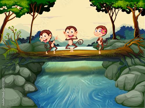 Canvas Prints River, lake Three monkeys crossing the river