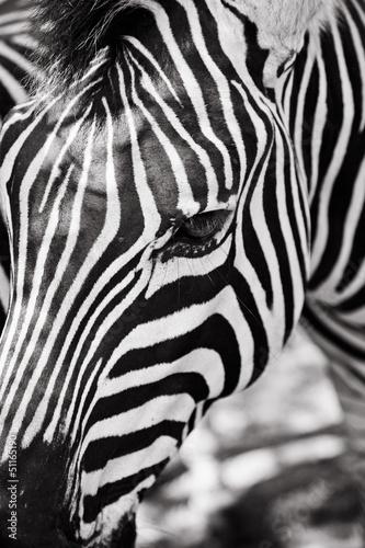 Recess Fitting Zebra Closeup