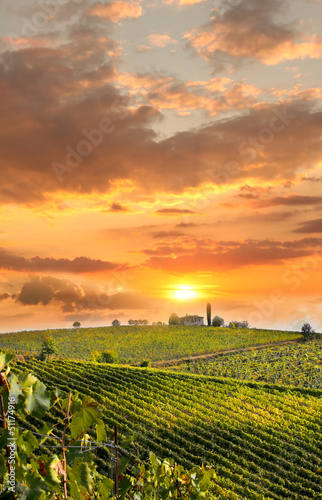 Photo sur Aluminium Vignoble Chianti, famous vineyard in Italy
