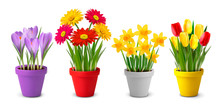 Collection Of Spring And Summer Colorful Flowers In Pots And Wat