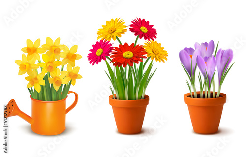 Photo Collection of spring and summer colorful flowers in pots and wat