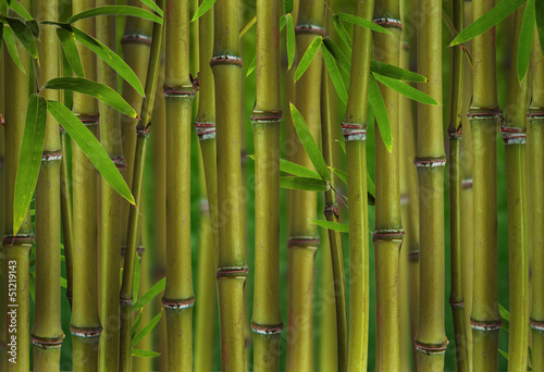 bambus-kielkuje-las