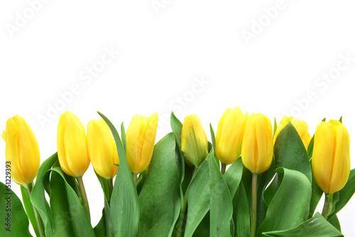 Foto op Canvas Bloemen yellow tulips