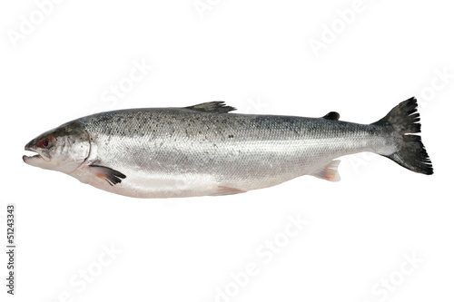 Photo Stands Fish Fresh salmon isolated