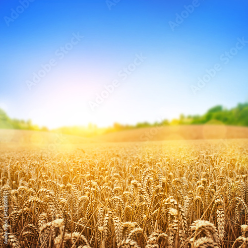 Garden Poster Culture Golden Wheat Field