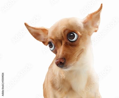 zabawny-portret-psa