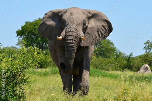Photo  elephant at attack