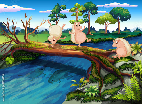 Canvas Prints River, lake Hedgehogs playing at the river