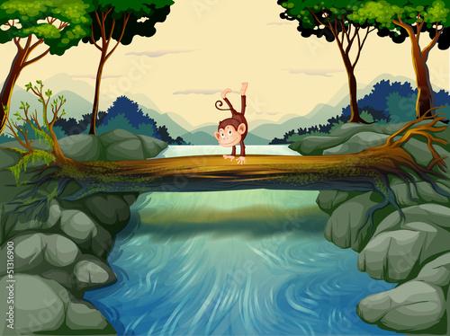Canvas Prints River, lake A monkey crossing the river