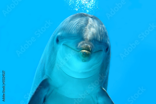Photo sur Aluminium Dauphin Dolphin Look