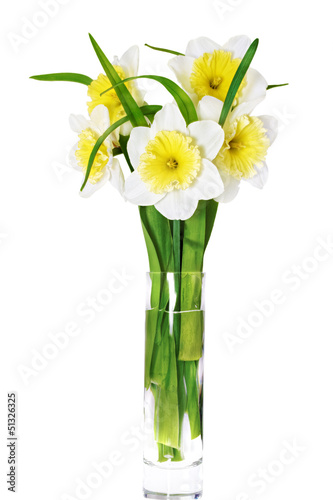 Deurstickers Narcis .Beautiful spring flower narcissus (Daffodil). .