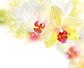 Fototapeta Storczyki Beautiful Orchid border