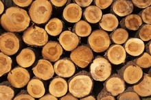 A Pile Of Cut Tree Trunks Givi...