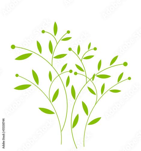 Fototapeta Green plant obraz na płótnie