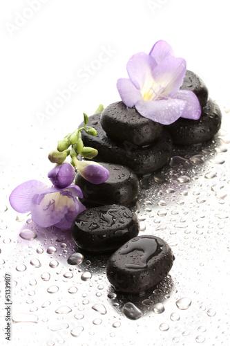 zdrojow-kamienie-i-purpura-kwitniemy-na-mokrym-tle