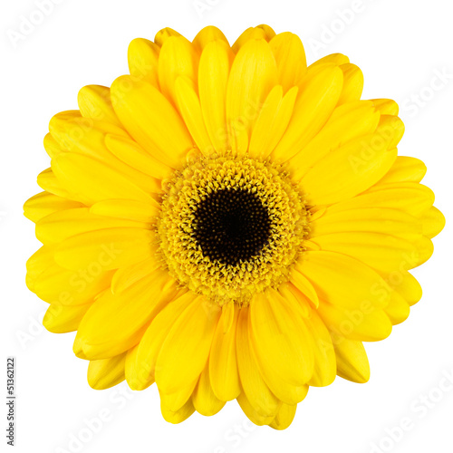 Poster Gerbera Beautiful Yellow Gerbera Flower Macro Isolated on White