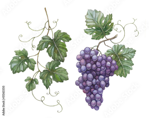 Fotografía  Watercolor illustration of grapes with leaves
